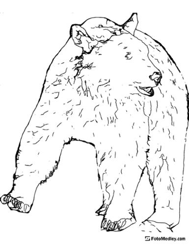 A coloring page of a bear wandering in the wild.